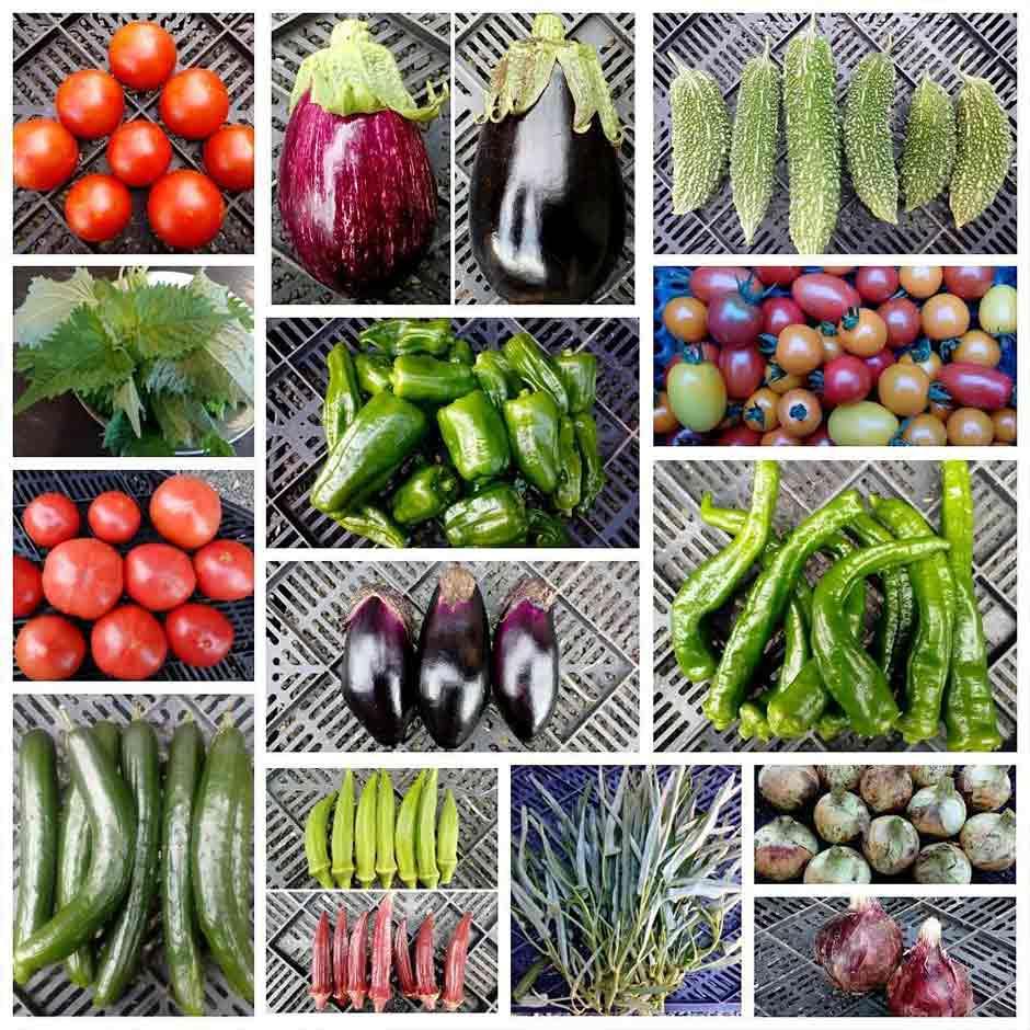しんぺ~農園 お野菜の販売