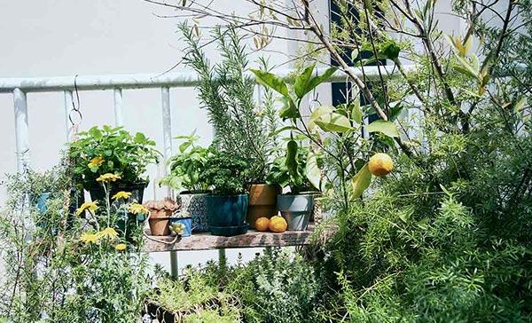 PLANT A GARDEN<br>育てて、食べる
