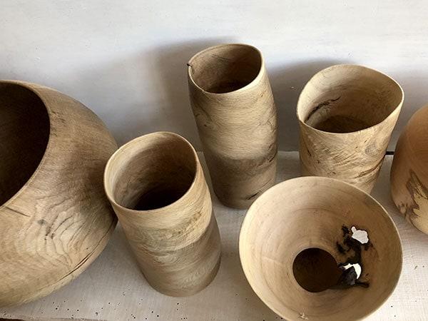 木の現象を見る 三輪泰季